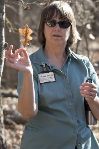 S Tuttle explaining oak leaf ID