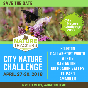 City Nature Challenge @ Crawford Park